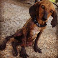 Foster a street dog