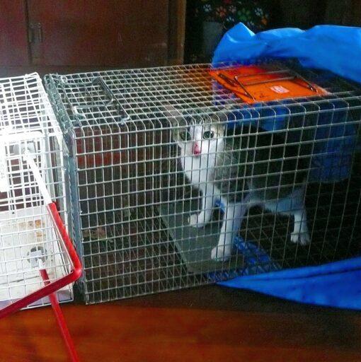 TNR program of stray cats