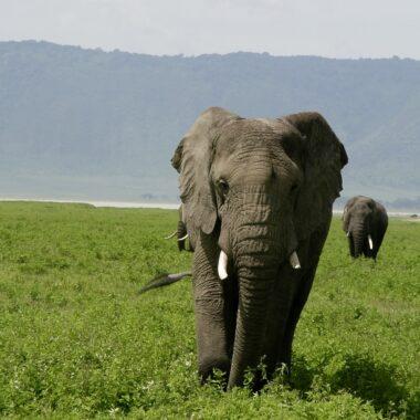 Tanzania February 2017