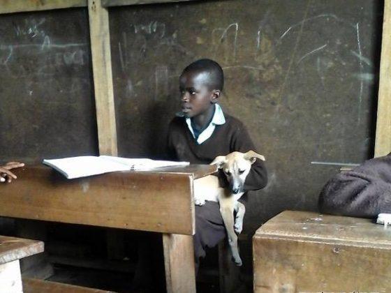 Bringing your dog to school in Tanzania
