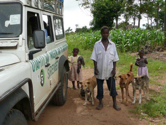 Vaccinating dogs in Tanzania