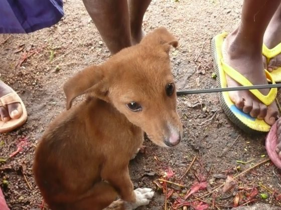 Puppy in Tanzania