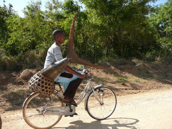 Miraculous catch in Tanzania