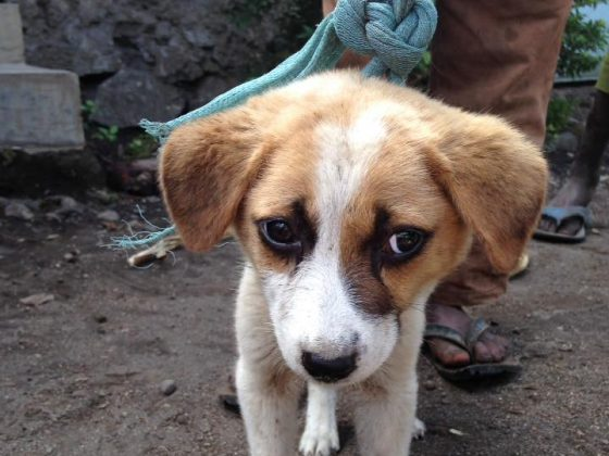 A little dog without collar in Tanzania