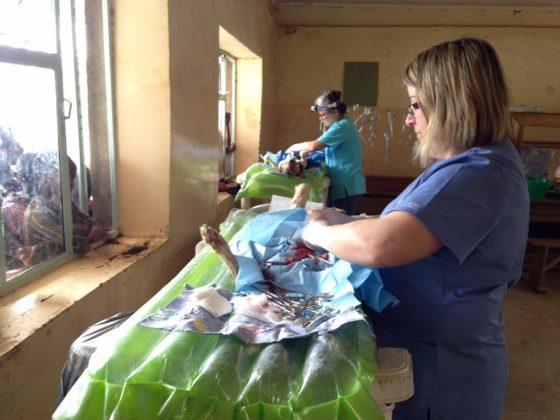 Dog clinic at primary school in Tanzania