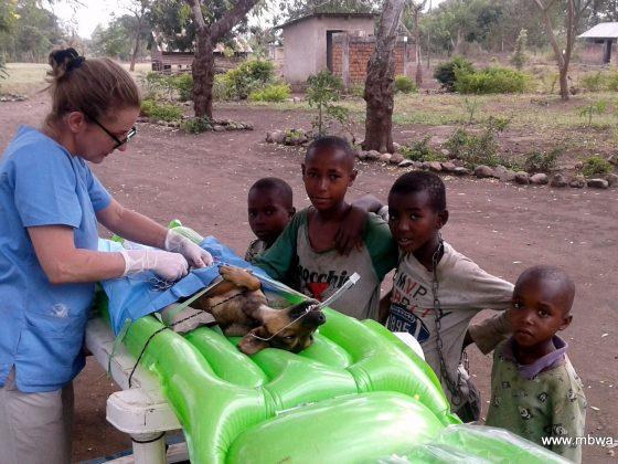 Dog spay in Tanzania with future veterinarians