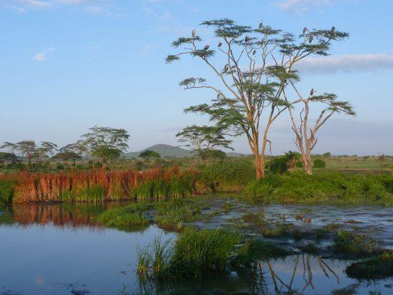 Serengeti Foundation for Veterinary Aid International Tanzania