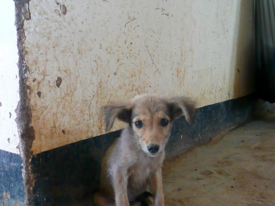 Puppy at FVAI clinic in Tanzania