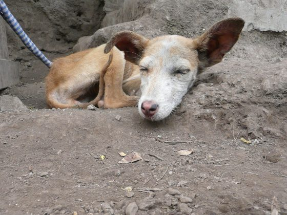 Skinny dog in Tanzania