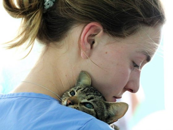 Comforting a feline patient at FVAI clinic in Belize