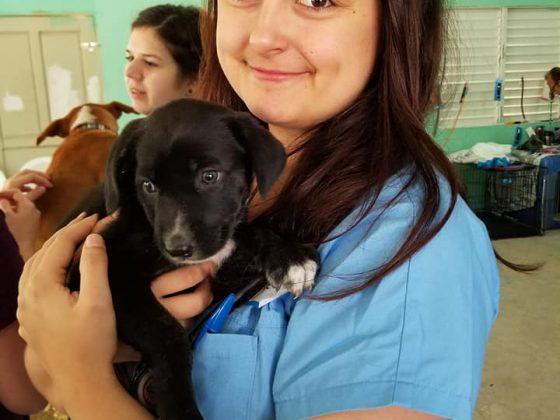 A future veterinarian at FVAI clinic in Belize