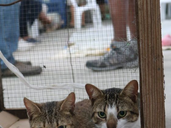 Feline patients in the Mayan village of Patchakan