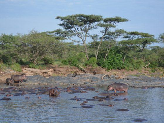 Hippo pool in Tanzania