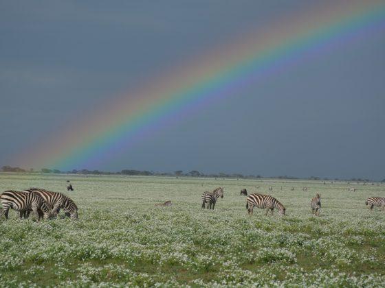 Beautiful rainbow in the Serengeti