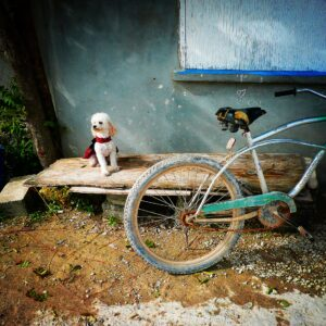 Cute little dog in Sarteneja, Belize