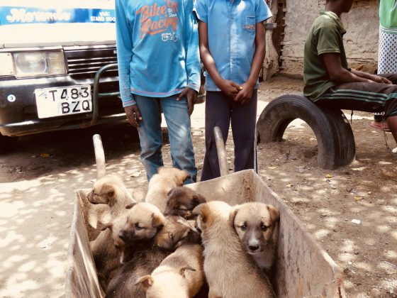 A barrow of puppies will be vaccinated against rabies