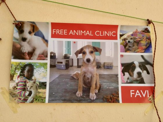 FVAI veterinary clinic in Tanzania