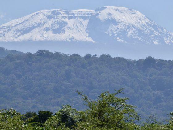 Beautiful Kilimandjaro, highest summit of Africa