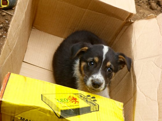 A cute puppy comes to FVAI clinic in Tanzania
