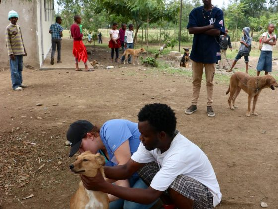 1235 dogs vaccinated against rabies. Amazing !