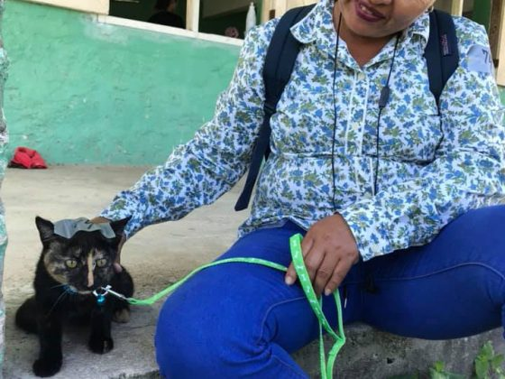 A Belizean is bringing her cat to FVAI spay neuter clinic in San Joaquin Belize
