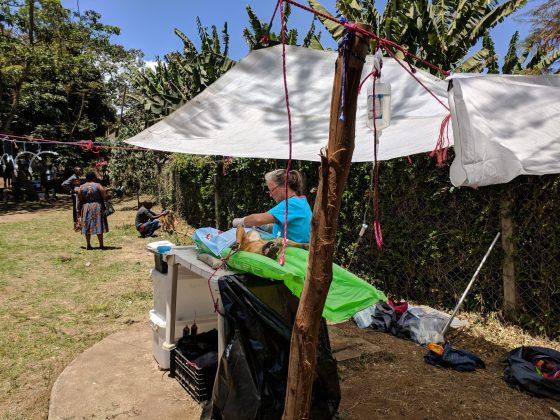 Surgery station at FVAI spay neuter clinic in Tanzania