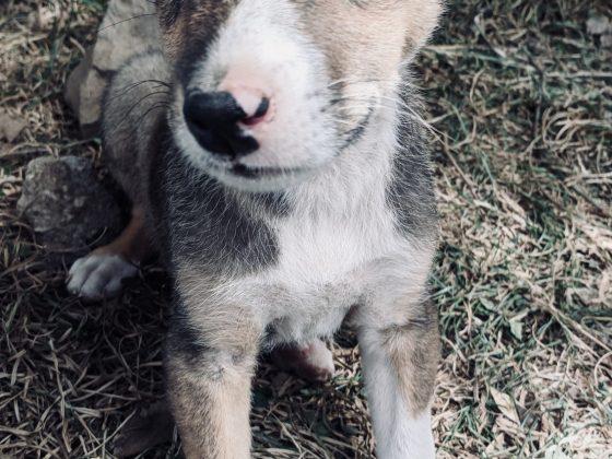 A cute puppy patient at FVAI clinic in Tanzania