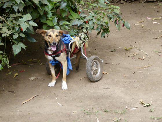 Rescued dog at Mbwa Wa Africa in Tanzania