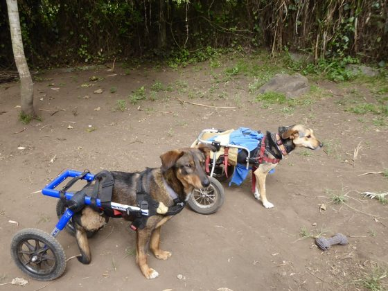 Two rescued dogs and friends at Mbwa Wa Africa in Tanzania