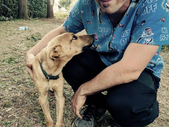 Joe, a FVAI vet assistant volunteer, with a cute dog in Tanzania
