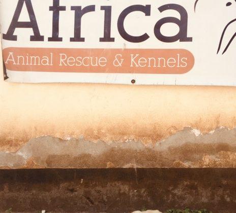 FVAI 's partner in Tanzania, Mbwa Wa Africa