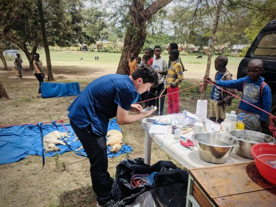Recovery zone and data collection at FVAI spay neuter clinic in Tanzania
