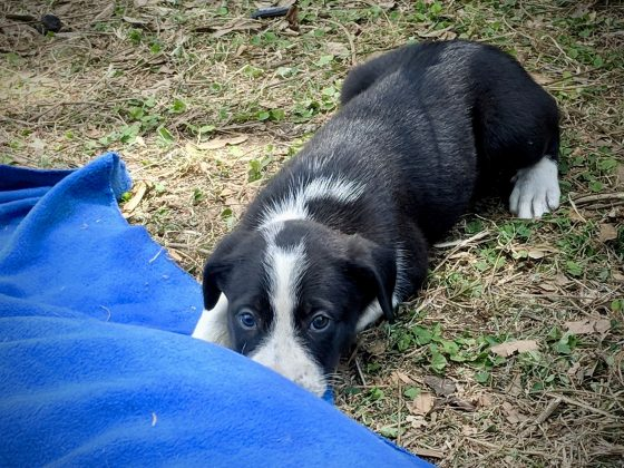 Shy puppy at FVAI spay neuter clinic in Tanzania