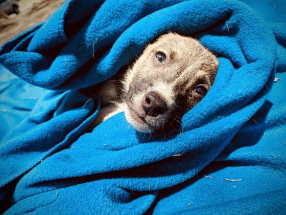 """Bandit"" a rescued puppy in Tanzania"