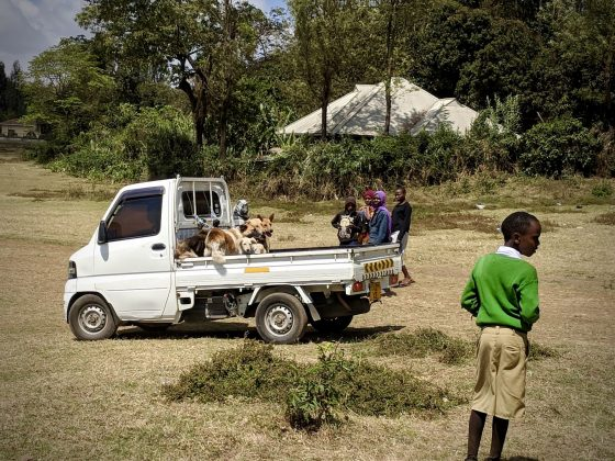 Dogs arriving at FVAI spay neuter clinic in Africa