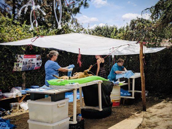 Outdoor FVAI spay neuter clinic in Tanzania