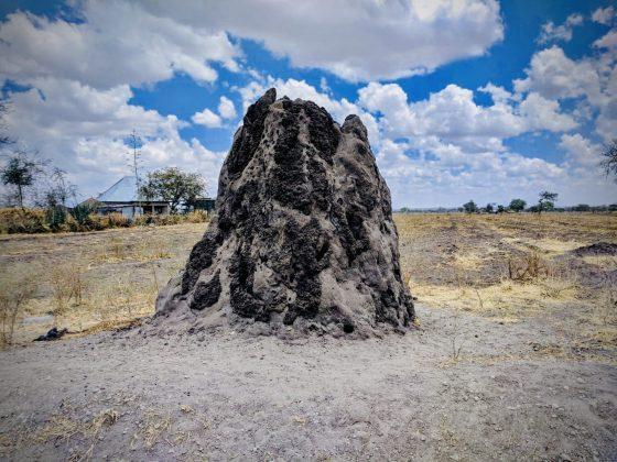 Termite mound in Tanzania, FVAI safari