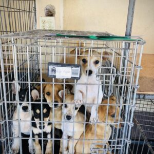 A cute family waiting to be sterilized at FVAI clinic in Baja California