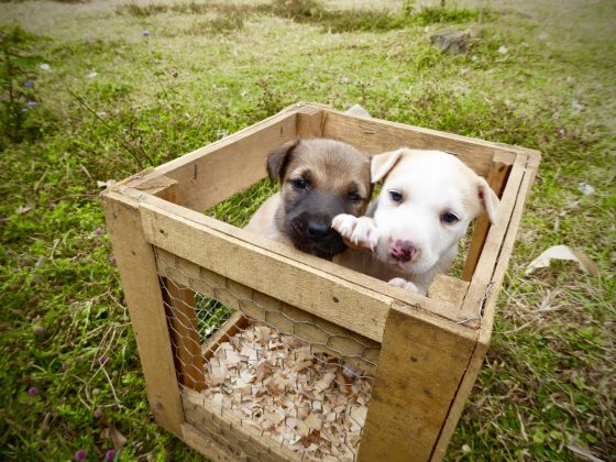 Puppies arriving at our veterinary clinic in Africa