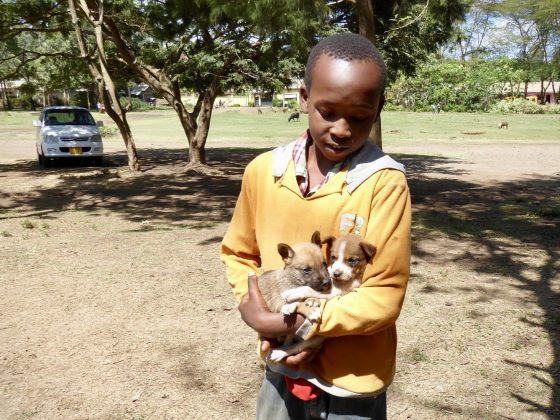 A young boy is bringing two puppies at FVAI clinic in Tanzania