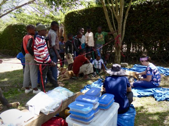 Recovery zone at FVAI spay neuter clinic in Tanzania