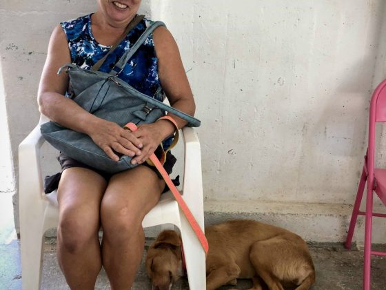 Waiting at FVAI spay neuter clinic in Sarteneja Belize