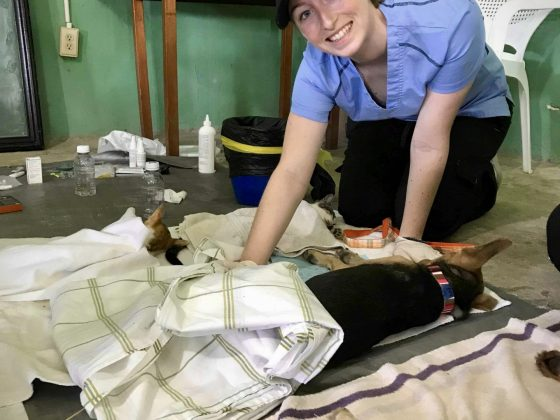 A FVAI vet nurse is keeping an eye on a dog at recovery
