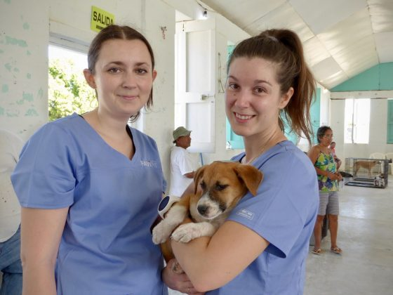 FVAI volunteers at veterinary clinic in Belize