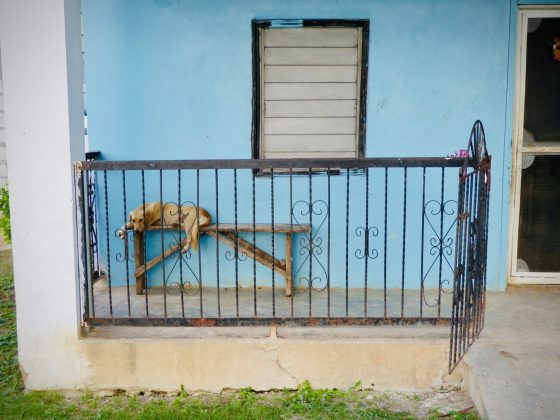 A dog relaxes in Sarteneja, FVAI project in Belize