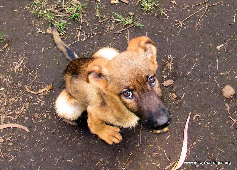 A puppy in Tanzania