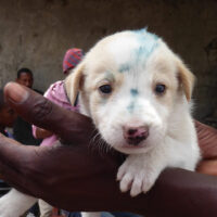 A blue mark on the forehead means the puppy was vaccinated against rabies.