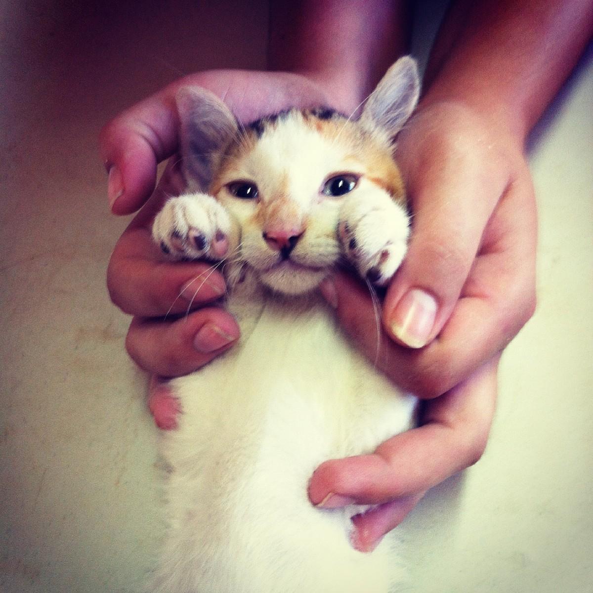 Stérilisation d'une chatte