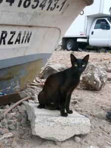 chat à Baja California