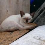 chaton à Baja California, Mexique